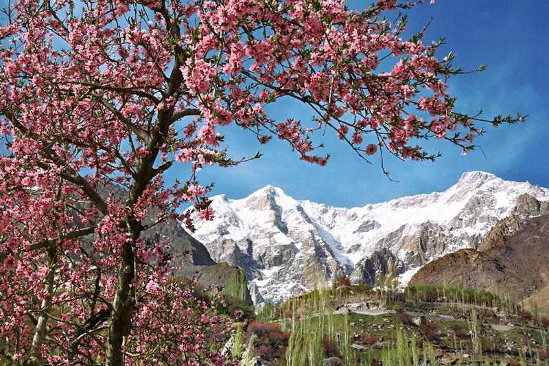 hunza gilgit spring blossom tour